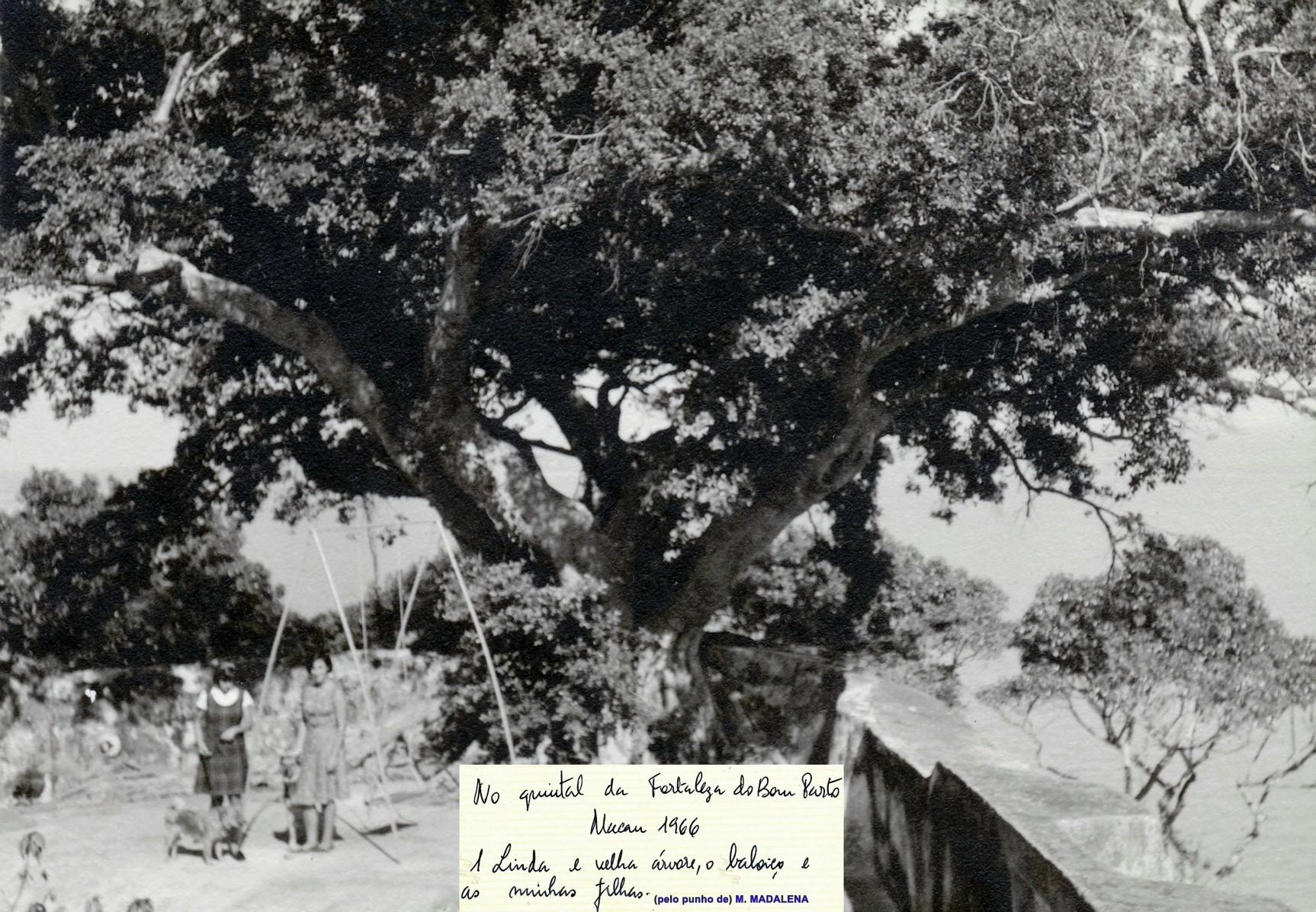 037 66-10 Bom Parto-árvore-baloiço-as filhas-os cães
