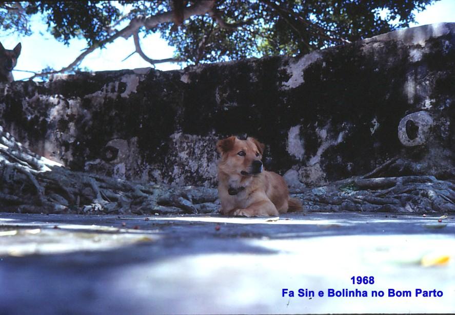 086 68 Fa Sin e Bolinha