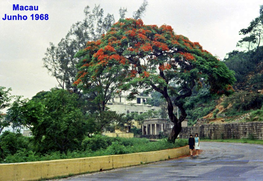 127 68-06 manas N Silva passeando