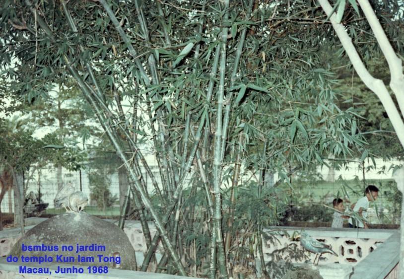 145 68-06 bambus no jardim de Kun Iam Tong