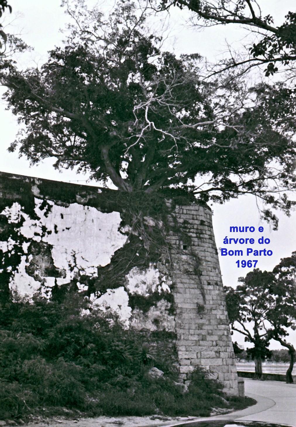 157 67 muro e árvore do Bom Parto