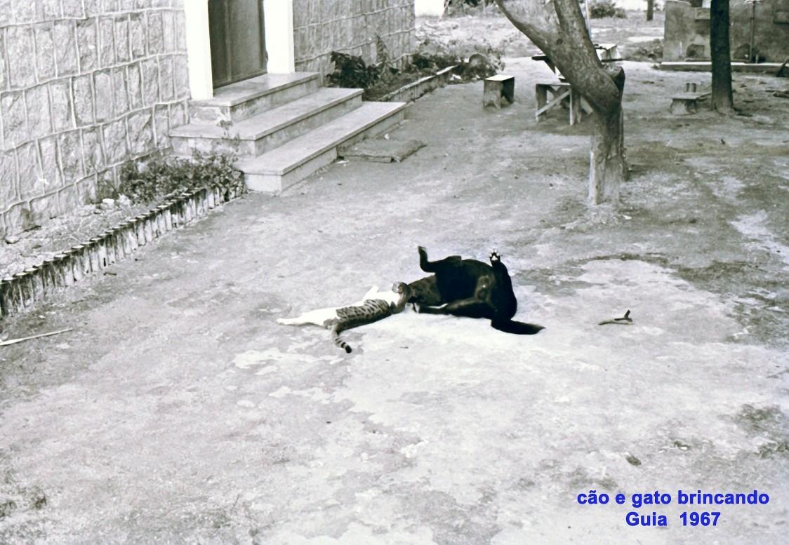 164 67 cão e gato brincando na Guia