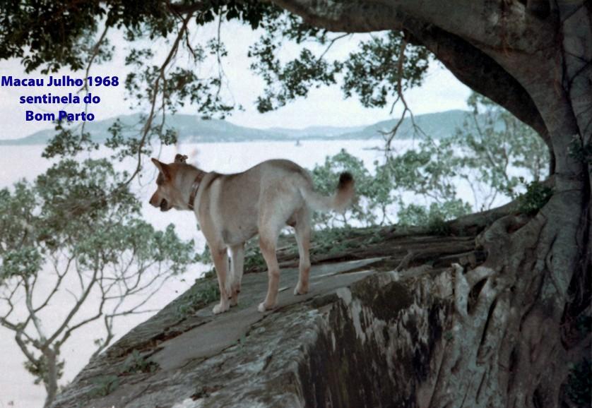 168 68-07 cão vigia o Bom Parto