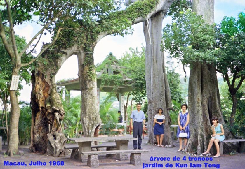 180 68-07 família N Silva sob árvore de 4 troncos-Kun Iam Tong