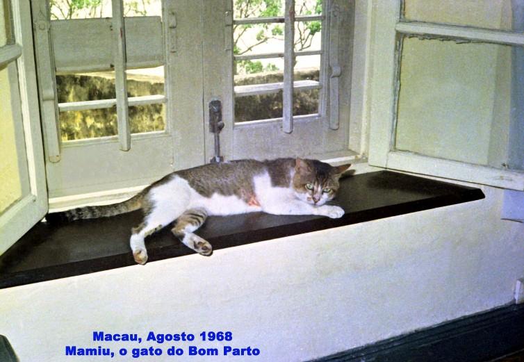 210 68-08 Mamiu, o gato do Bom Parto