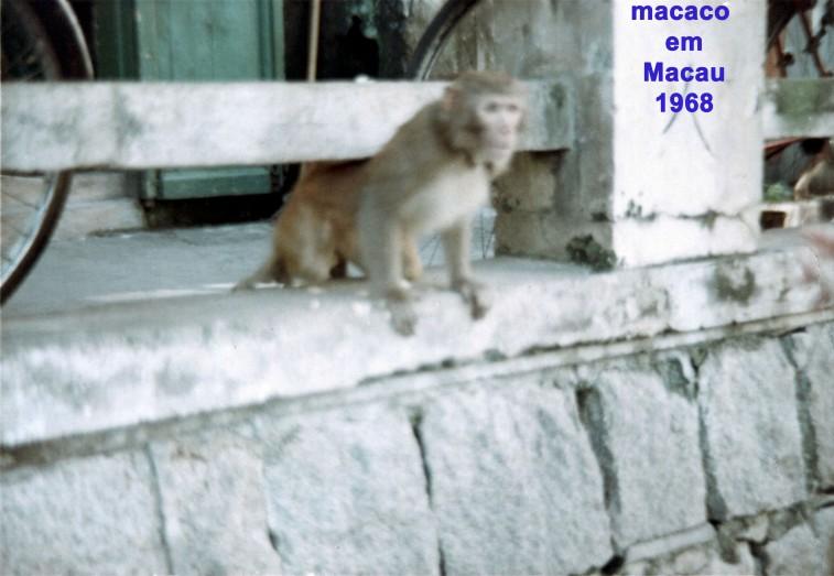215 68 macaco em Macau