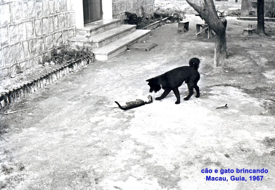 235 67 cão e gato brincando na Guia