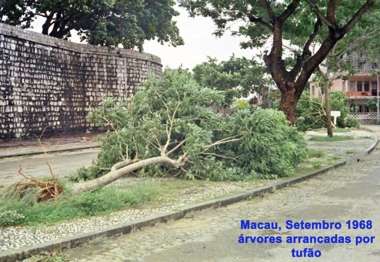 256 68-09 árvores arrancadas por tufão