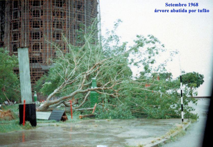 272 68-09 árvore abatida por tufão