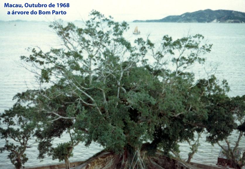 342 68-10 a árvore do Bom Parto