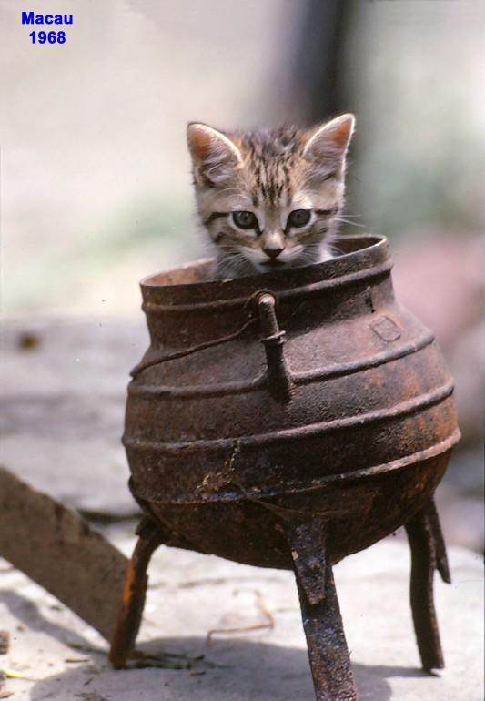 68 um gato no pote